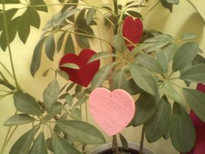 Felt hearts hanging in the plant.