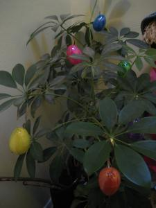 An Easter tree - the hall plant decorated with the rest of the hanging Easter eggs.